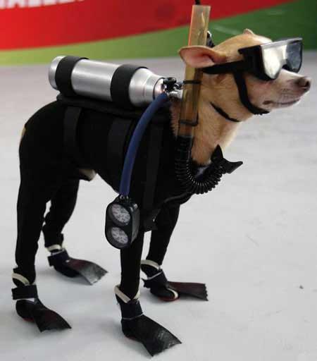 scuba-diving-dog
