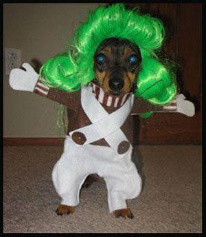 oompa_loompa_dog