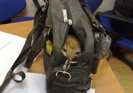 69-hiding-cat