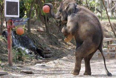 93-elephant-b-ball