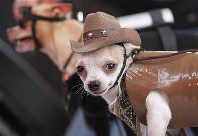 Philippines Dog Show