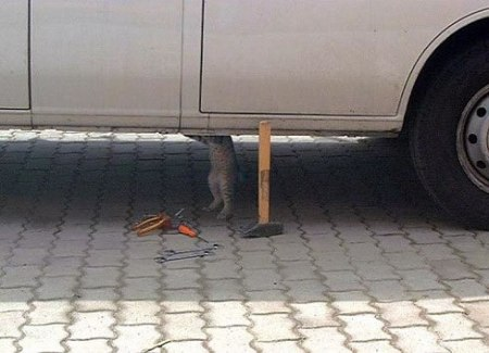 58-cat-working-on-car