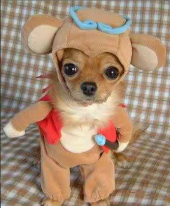 chihuahuacostume