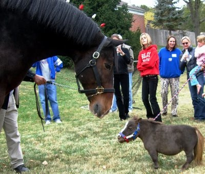 horsestandoff1
