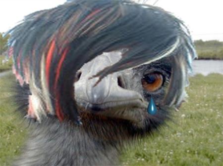 Emo_emu