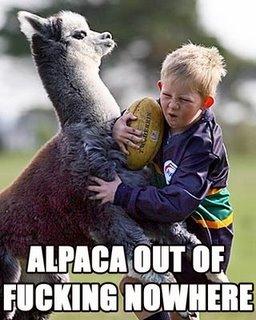 alpacapic
