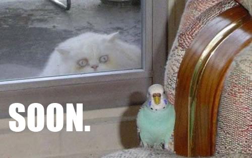 83-pedo-cat-stalker-copy.jpg